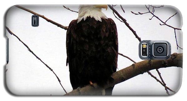 Cape Eagle Galaxy S5 Case