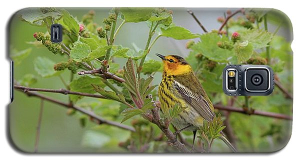 Cape May Warbler Galaxy S5 Case