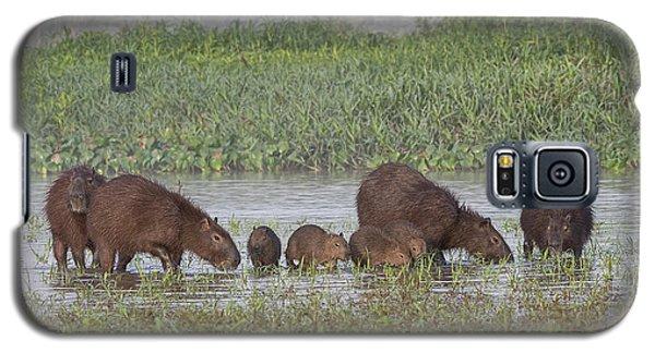 Galaxy S5 Case featuring the photograph Capybara by Wade Aiken