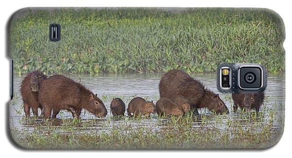 Capybara Galaxy S5 Case by Wade Aiken