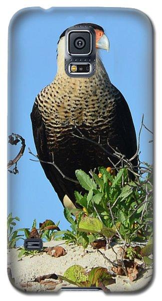 Galaxy S5 Case featuring the photograph Caracara Portrait by Debra Martz