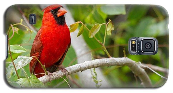 Cardinal 147 Galaxy S5 Case