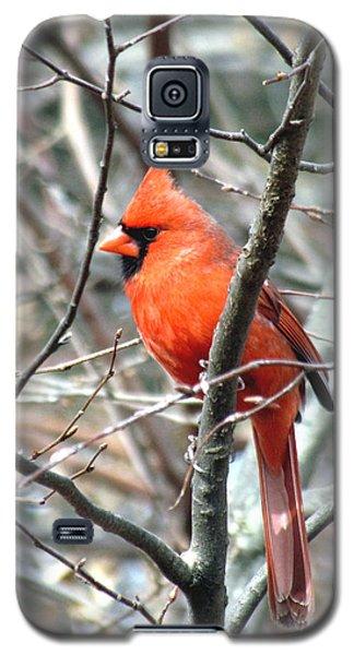 Cardinal 2 Galaxy S5 Case