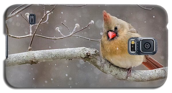 Cardinal And Falling Snow Galaxy S5 Case