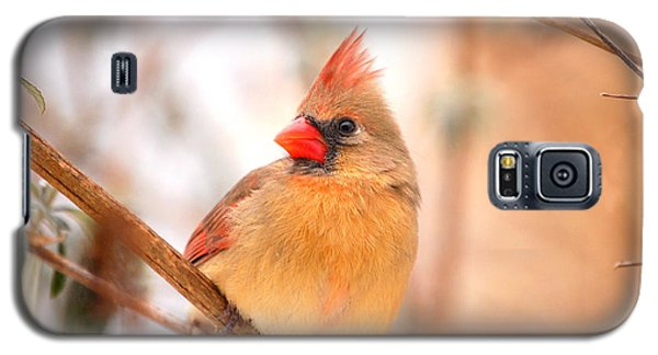Cardinal Bird Female Galaxy S5 Case