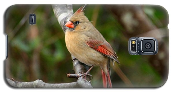 Galaxy S5 Case featuring the photograph Cardinal by Cathy Harper