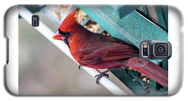 Cardinal Close Up Galaxy S5 Case