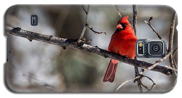 Cardinal Galaxy S5 Case by Dan Traun
