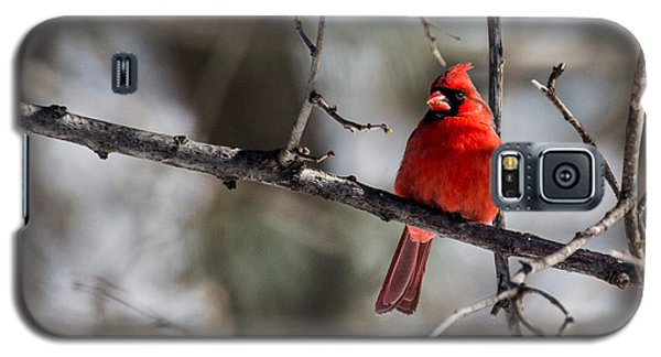 Galaxy S5 Case featuring the photograph Cardinal by Dan Traun
