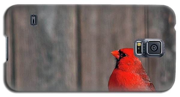 Cardinal Drinking Galaxy S5 Case