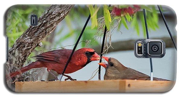 Cardinal Feeding  Galaxy S5 Case