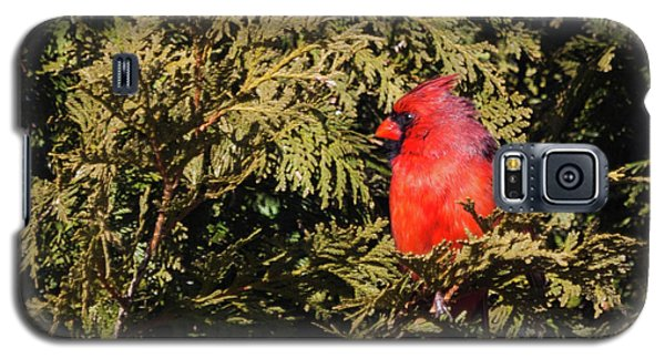 Galaxy S5 Case featuring the photograph Cardinal I by Michelle Wiarda