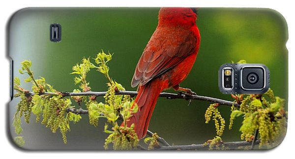 Cardinal In Early Spring Galaxy S5 Case