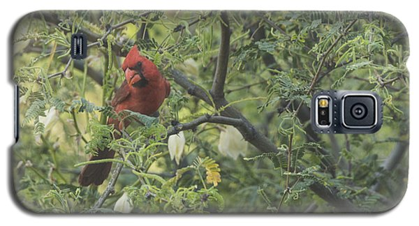 Galaxy S5 Case featuring the photograph Cardinal In Mesquite by Laura Pratt