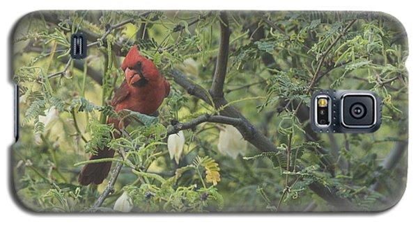 Cardinal In Mesquite Galaxy S5 Case by Laura Pratt