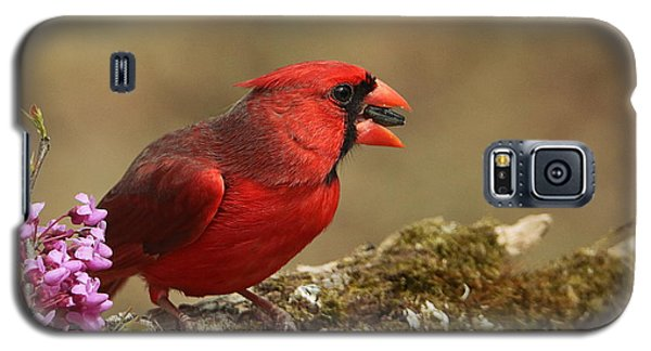 Cardinal In Spring Galaxy S5 Case