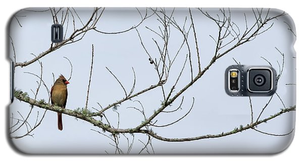 Cardinal In Tree Galaxy S5 Case by Richard Rizzo