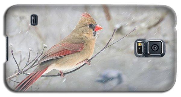 Cardinal In Winter Galaxy S5 Case
