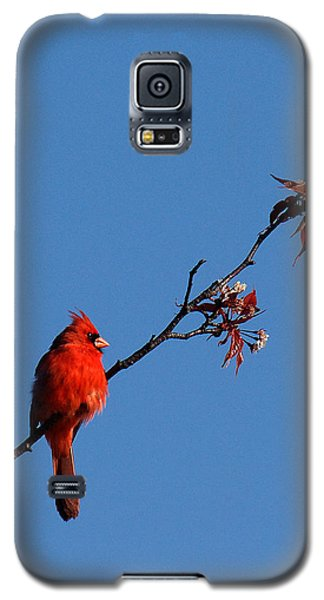 Galaxy S5 Case featuring the photograph Cardinal On A Cherry Branch Dsb033 by Gerry Gantt