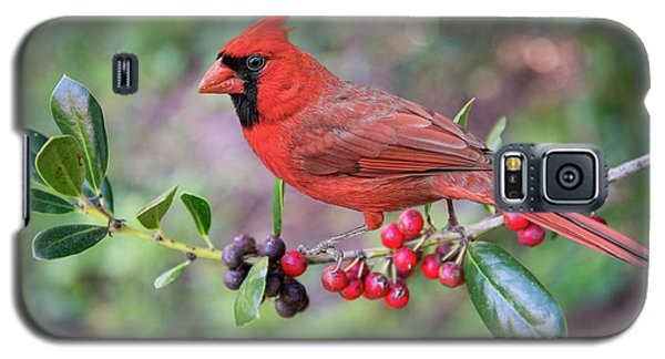 Galaxy S5 Case featuring the photograph Cardinal On Holly Branch by Bonnie Barry