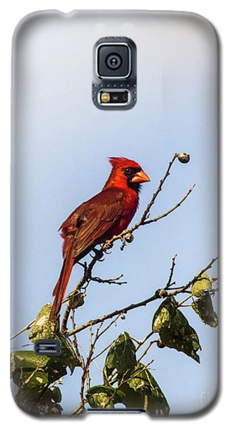 Galaxy S5 Case featuring the photograph Cardinal On Treetop by Robert Frederick
