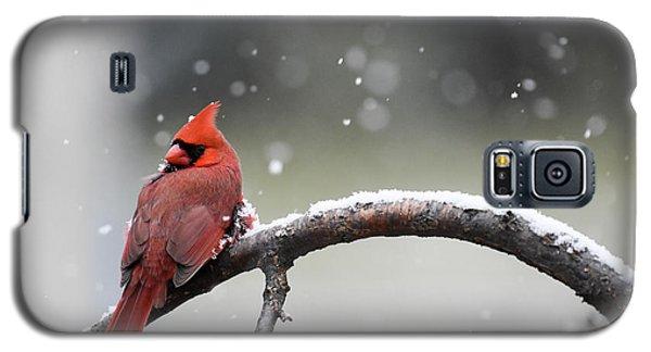 Cardinal Snowfall Galaxy S5 Case