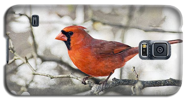 Galaxy S5 Case featuring the photograph Cardinal Spring - D009909-a by Daniel Dempster