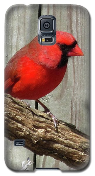 Cardinal Waiting For Spring Galaxy S5 Case