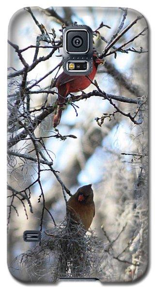 Lovebird Galaxy S5 Case - Cardinals In Mossy Tree by Carol Groenen