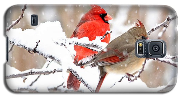 Cardinals In The Winter Galaxy S5 Case