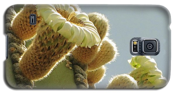 Galaxy S5 Case featuring the photograph Cardon Cactus Flowers by Marilyn Smith