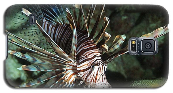 Caribbean Lion Fish Galaxy S5 Case