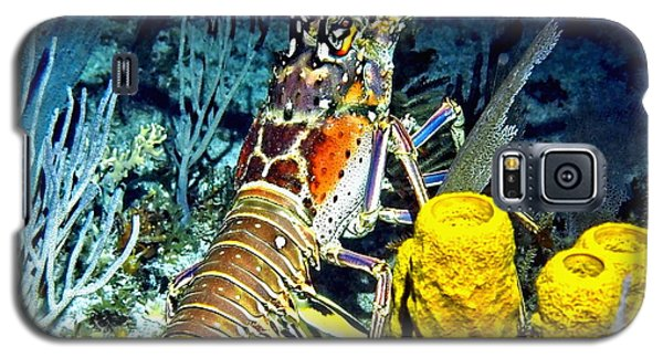 Galaxy S5 Case featuring the photograph Caribbean Reef Lobster by Amy McDaniel