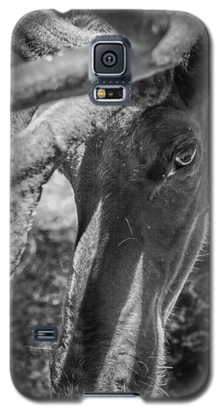 Caribou Black And White Galaxy S5 Case