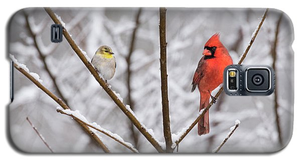 Goldfinch And Cardinal Galaxy S5 Case