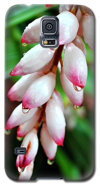 Carmellas Ginger And Raindrops Galaxy S5 Case
