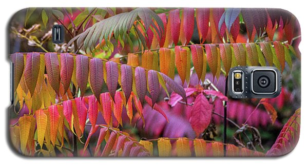 Galaxy S5 Case featuring the photograph Carnival Of Autumn Color by Bill Pevlor