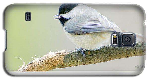 Carolina Chickadee, Animal Portrait Galaxy S5 Case