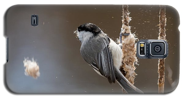 Carolina Chickadee Feeding On Cattail Galaxy S5 Case