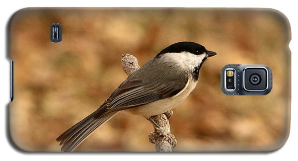 Carolina Chickadee On Branch Galaxy S5 Case