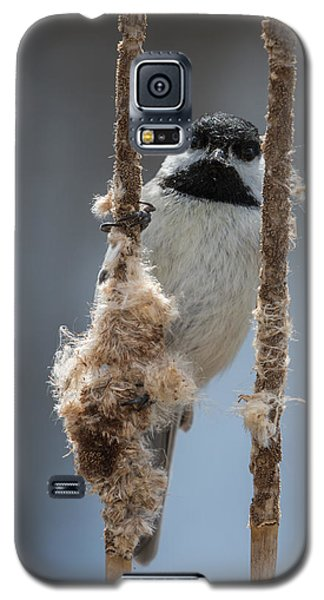Carolina Chickadee On Cattails Galaxy S5 Case