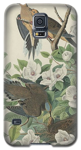 Carolina Pigeon Or Turtle Dove Galaxy S5 Case by Dreyer Wildlife Print Collections