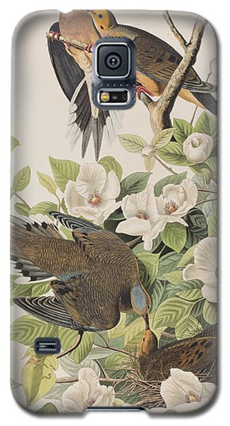 Carolina Turtle Dove Galaxy S5 Case by John James Audubon