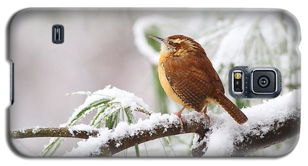 Carolina Wren In Snowy Pine Galaxy S5 Case