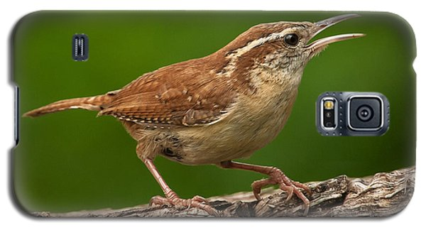 Carolina Wren Galaxy S5 Case by Jim Moore
