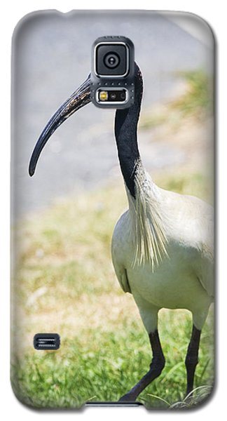 Carpark Ibis Galaxy S5 Case by Jorgo Photography - Wall Art Gallery