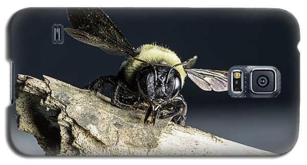 Carpenter Bee Galaxy S5 Case