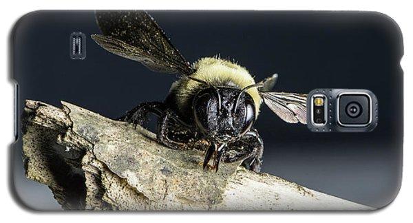 Carpenter Bee Galaxy S5 Case