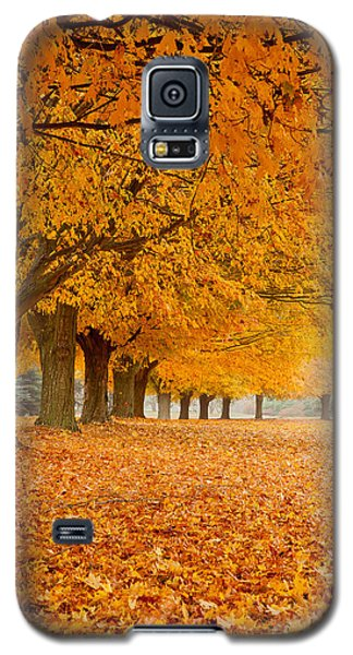 Carpet Of Gold II Galaxy S5 Case by Butch Lombardi