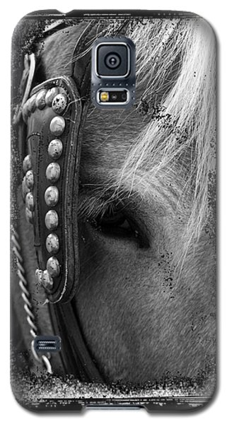 Carriage Horse B And W Galaxy S5 Case